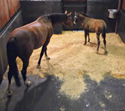 Mare and Foal on StableComfort